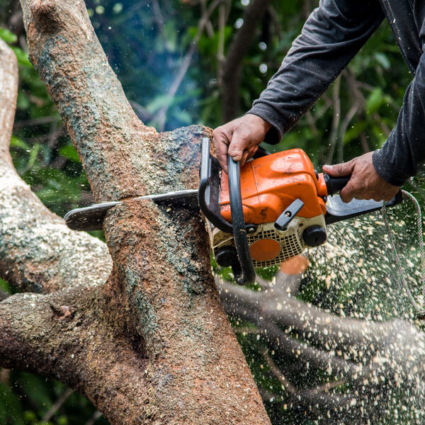 A person using a chainsaw to cut down a tree